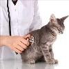 Ветеринарные клиники в Старом Дрожжаном